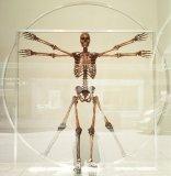 układ kostny człowieka